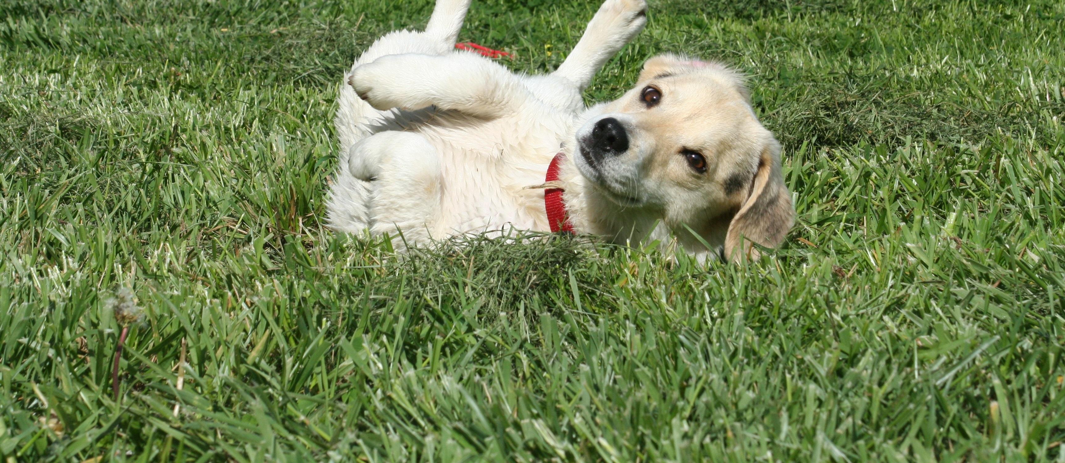 puppy-110193-wide